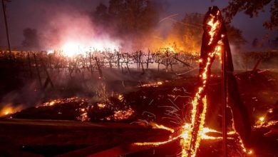 Photo of Пожары на западном побережье США наносят огромный вред экологии и людям