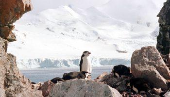 Мощное землетрясение произошло около Антарктиды