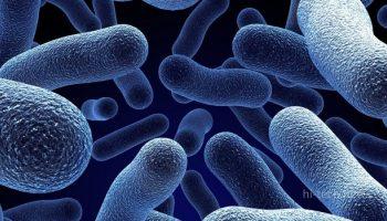 Ученые «воскресили» микроорганизмы, которым 100 млн лет