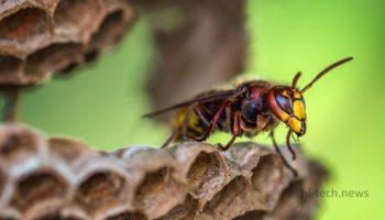 3D печать помогает пчелам. Создан проект специального улья (видео)