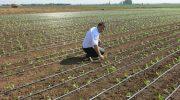 Крым увеличивает площади орошаемых земель