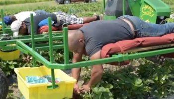 Из-за локдауна «Польские фермеры «одалживают» украинских заробитчан друг у друга»