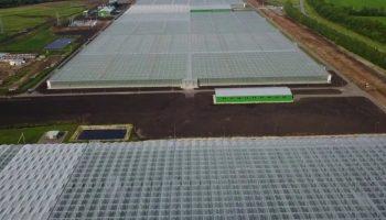 С начала года производство тепличных овощей в России увеличилось на 40%