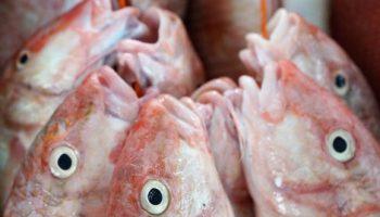 Россиян предупредили о скором подорожании рыбы